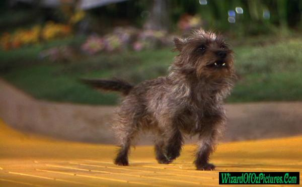What S The Dog Breed From The Wizard Of Oz